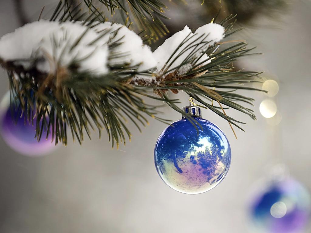 trasplante capilar regalo de navidad